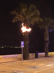 Incendio en una palmera del Paseo Marítimo la madrugada de Año Nuevo. / Foto: PRH